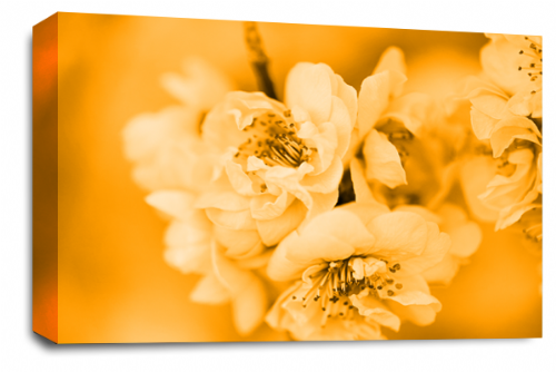 Floral Flower Wall Art Picture Orange Grey Spring Blossom Print